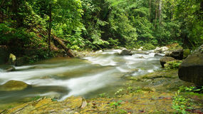 Borneo rain forest stream fall Stock Images