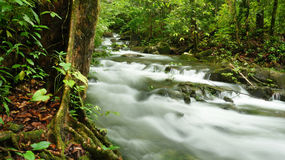 Borneo rain forest stream fall Stock Photography