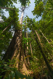 Borneo Rainforest Royaltyfri Foto