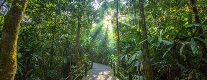 Borneo Rainforest Royalty Free Stock Photos