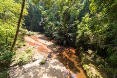 Borneo rainforest Stock Images