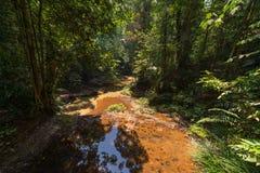 Borneo rainforest Royalty Free Stock Image