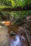 Borneo rainforest. Dense mixed lowland rainforest crossed by streams in Lambir Hills National Park, Borneo, Malaysia Royalty Free Stock Image