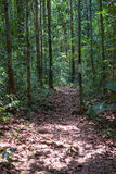 Borneo rainforest Stock Image
