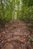 Borneo rainforest Royalty Free Stock Photos