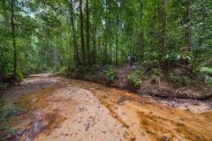 Borneo rainforest Stock Photo