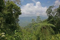 Borneo Rainforest view on a splendid sunny day. View of open and verdant green jungle in Borneo, near Mt Kinabalu, Sabah, Malaysia Stock Photography