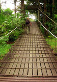 Borneo. Trekker on Bridge. Borneo..Trekker on Bridge over Jungle Canopy stock image