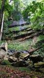 Borneo Tropical Rain Forest Royalty Free Stock Photo