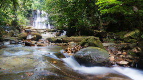 Borneo Tropical Rain Forest Royalty Free Stock Photos