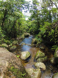 Borneo tropical rain forest stream fall Stock Photo