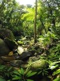 Borneo tropical rain forest stream fall Royalty Free Stock Photos
