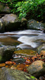 Borneo tropical rain forest stream fall Royalty Free Stock Images