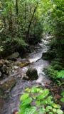 Borneo tropical rain forest stream fall Stock Photography