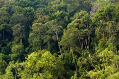 Borneo tropical rainforest Stock Photography
