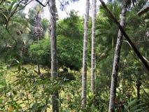 Borneo tropikalnego lasu deszczowego drzewa i plams obrazy royalty free