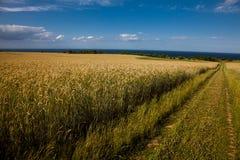 Bornholm krajobraz Fotografia Royalty Free