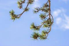 Boro em um céu azul Imagens de Stock