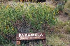 Boroniodes Paramela Adesmia in Laguna Nimez, eine Reserve der wild lebenden Tiere an EL Calafate im Patagonia, Argentinien Lizenzfreie Stockbilder