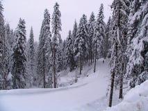 Borovets滑雪胜地,保加利亚 库存图片