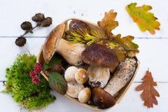 Borowik edulis, cepe, porcini rozrasta się nieumytego na biały drewnianym Fotografia Stock
