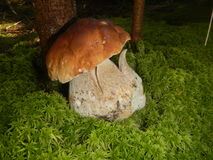 borowika chlebowa lasu s wiewiórka Zdjęcie Royalty Free