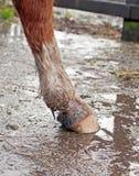 Borowinowa febra, deszcz/parzymy Fotografia Royalty Free