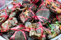 Borowinowi kraby w rynku fotografia stock