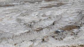 Borowinowy i padający - skupia się na ziemi zdjęcie wideo