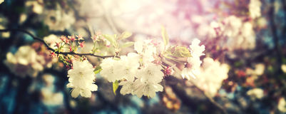 Borrão colorido bonito do fundo da flor horizontal Mola co fotos de stock royalty free