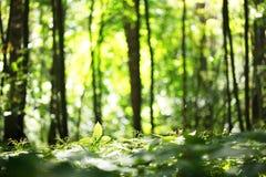 Borrão da floresta Fotos de Stock Royalty Free