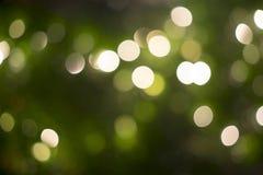 Borrão da iluminação em tree4 Imagem de Stock