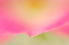 Borrão de Rosa Foto de Stock