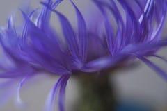 Borrão do Cornflower Imagens de Stock