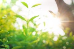 Borrão do fim acima do sumário e da luz solar verdes frescos fotos de stock