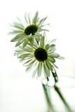 Borrão floral Fotos de Stock