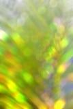 Borrão, folhas do coco do bokeh Imagens de Stock Royalty Free
