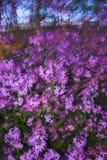Borrões dos sumários com flores Fotografia de Stock