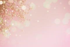 Borrões rosados Fotos de Stock Royalty Free