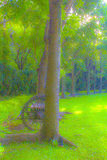 Borra a árvore Imagens de Stock Royalty Free