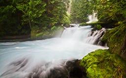 Borrachín Forets y agua apacible en el río de McKenzie, Oregon, los E.E.U.U. Fotos de archivo
