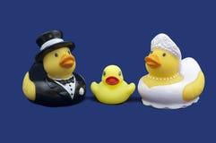 A borracha Ducks noivos e patinho Imagem de Stock Royalty Free