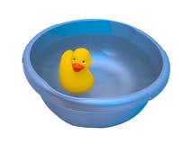 Borracha ducky Fotografia de Stock