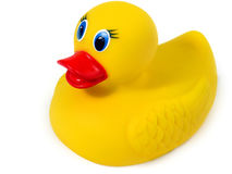 Borracha Ducky Fotos de Stock Royalty Free