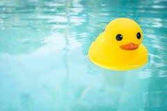 Borracha Ducky Imagem de Stock Royalty Free