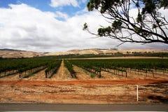 A  Barrosa Valley Vineyard Australia Royalty Free Stock Image