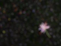 Borre as flores que caem na obscuridade - assoalho verde do musgo Imagens de Stock Royalty Free