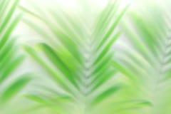 Borre o efeito verde do bokeh das folhas de palmeira - fundo tropical bonito da folha foto de stock