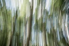 Borre o parque verde da natureza com fundo do sumário da luz do sol do bokeh Copie o espaço da aventura do curso e do conceito do fotografia de stock royalty free