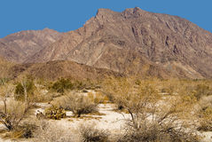 Borrego Springs Royalty Free Stock Images